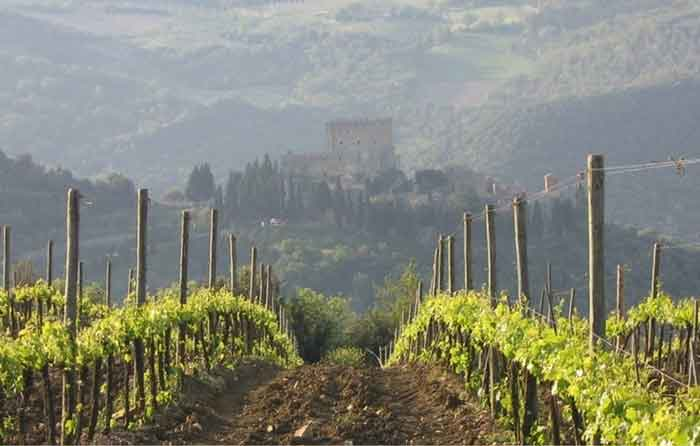 wines in southern Tuscany