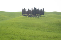 Cypress trees between San Quirico d'Orcia and Montalcino
