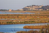 La Riserva Naturale della Diaccia Botrona e Castiglione della Pescaia